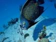Mango Inn Utilla Honduras Diving